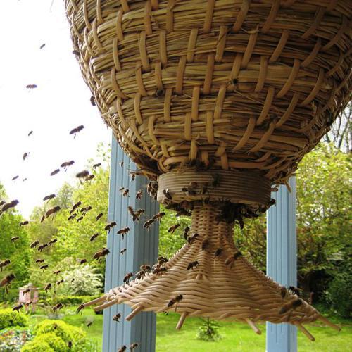 sun-hive